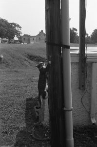 photograph of cat hanging on a utility pole